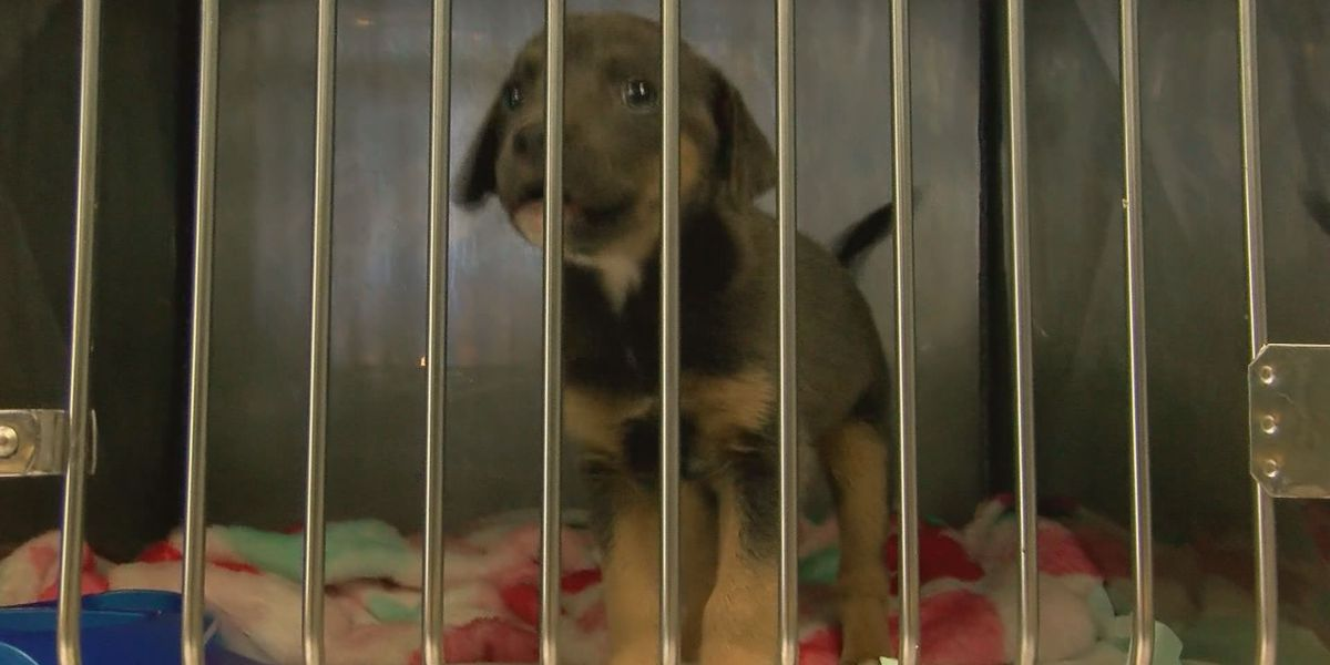 Illegal animal dumping adds to over-populated shelters in Moultrie