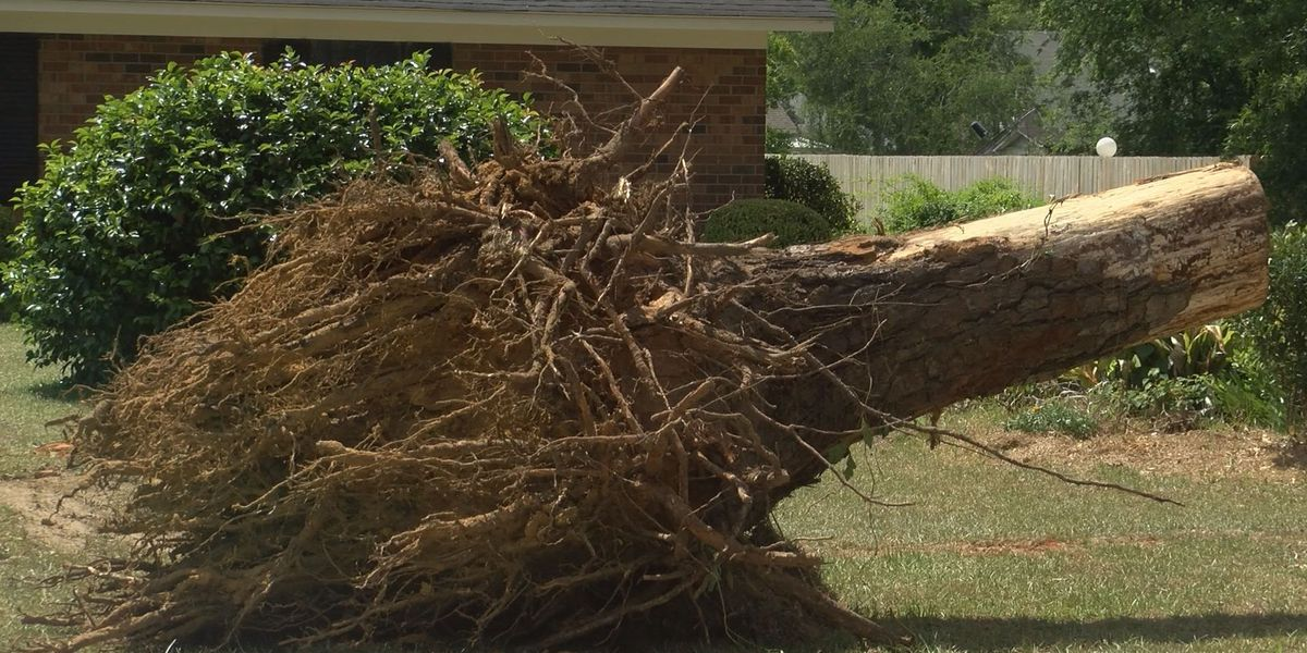 Dougherty County still provides help for storm debris cleanup