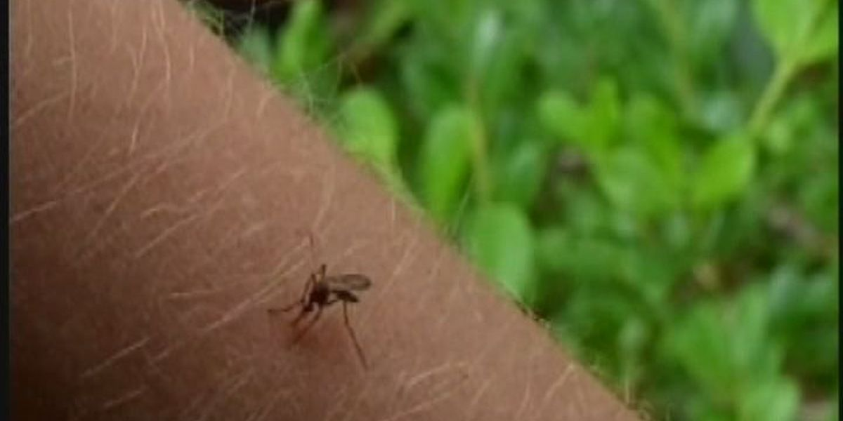 If you're going to be outdoors for the 4th, protect against mosquitoes