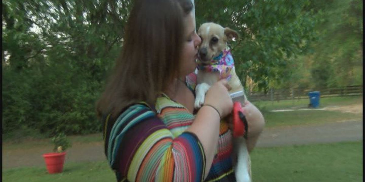Owner reunited with dog four years after disappearance