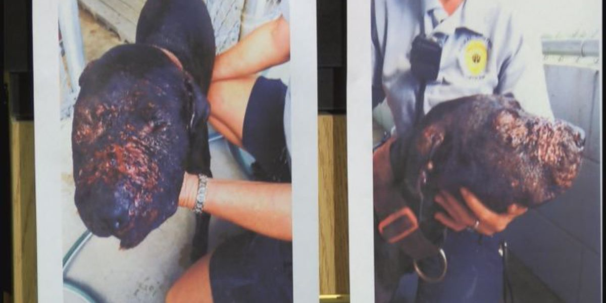 Cordele PD seeks out dog fighters
