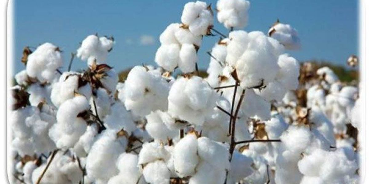 Cotton experts meet in Tifton
