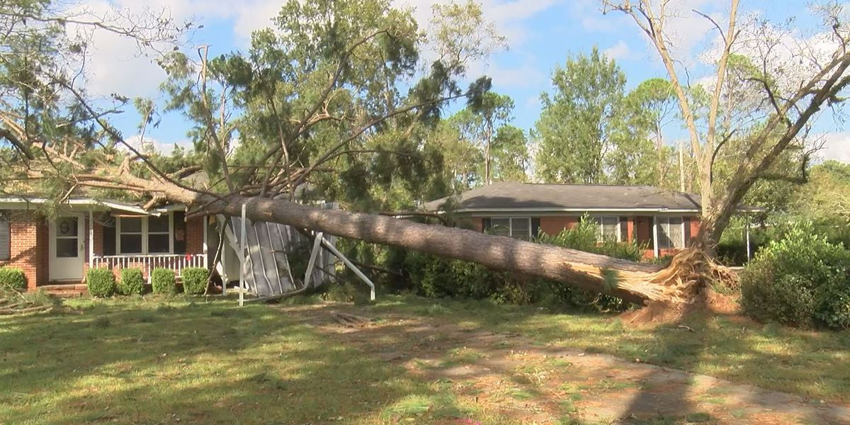 Tree falls on home in Albany, reminds couple of previous storms