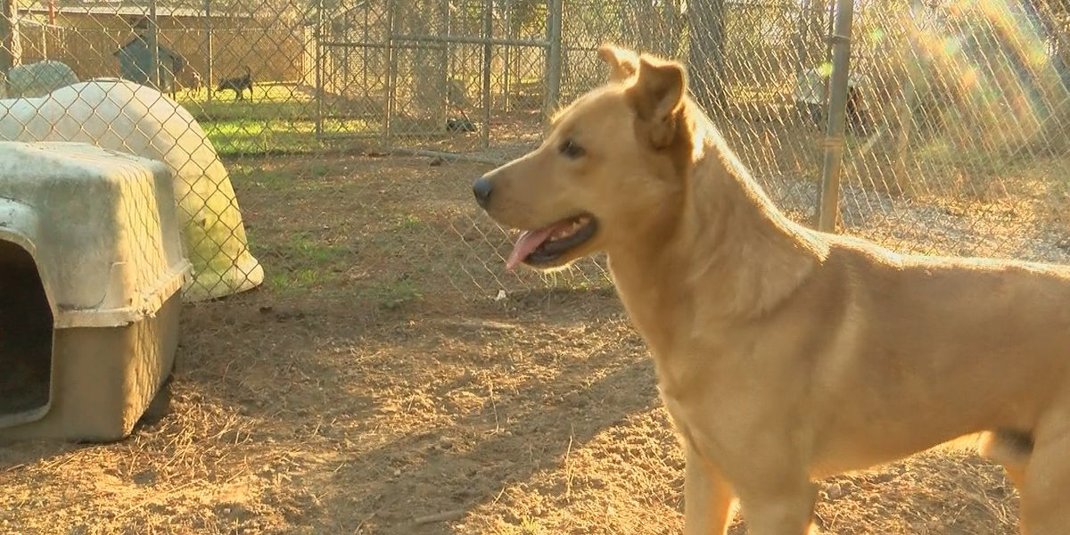 Veterinarians: Don't rush to adopt pets for the holidays