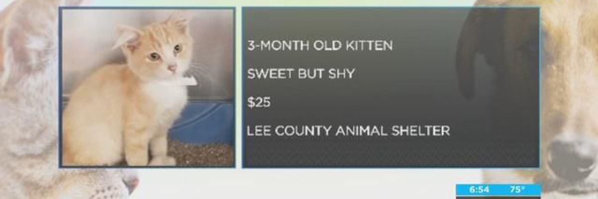 Pet of the Week, Aug. 20-24