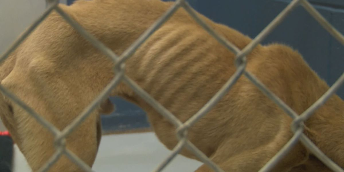 Lee County man charged with animal cruelty