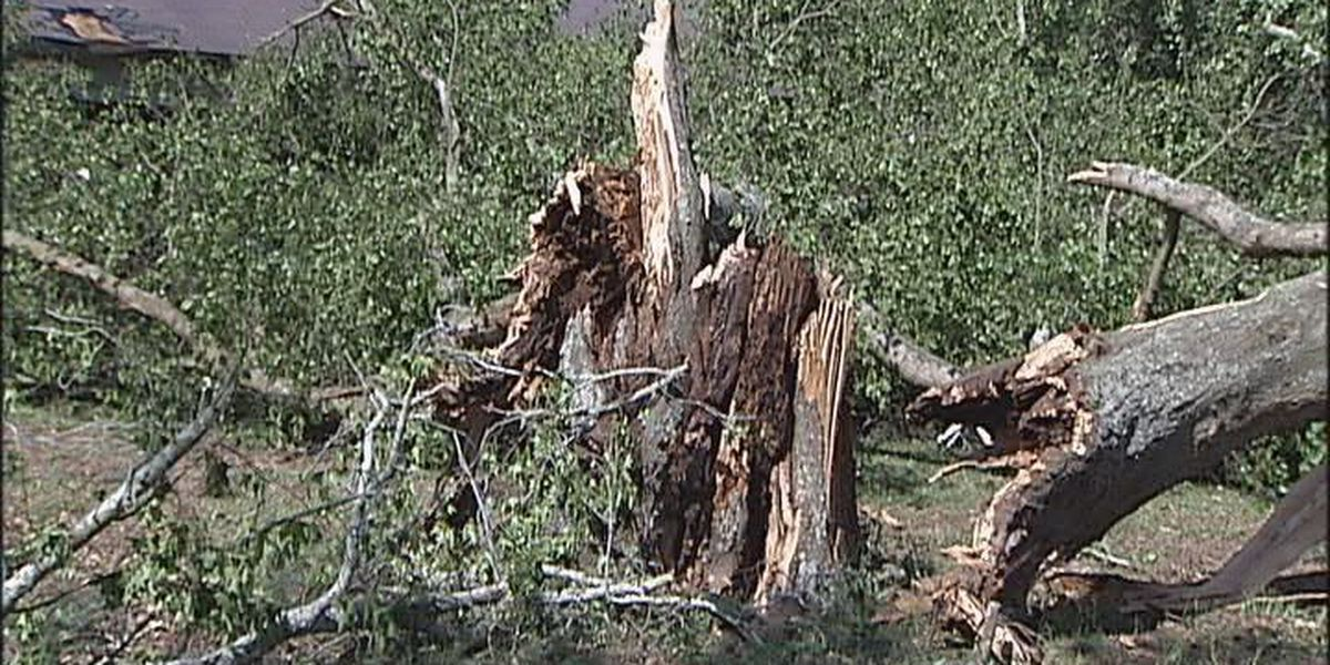 Storm damage in Terrell Co.