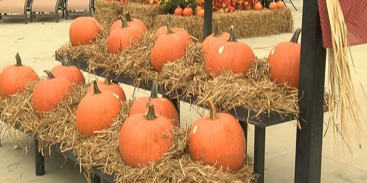 Georgia farmer offers tips on pumpkin growing