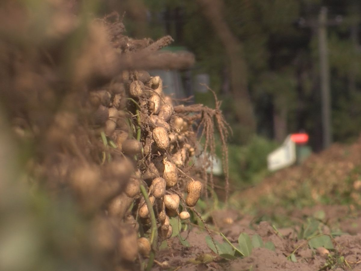 South GA peanut farmers wait to see how US, China trade war will affect crop sales