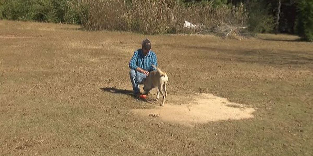 Americus K9 police officer charged with felony cruelty to animals