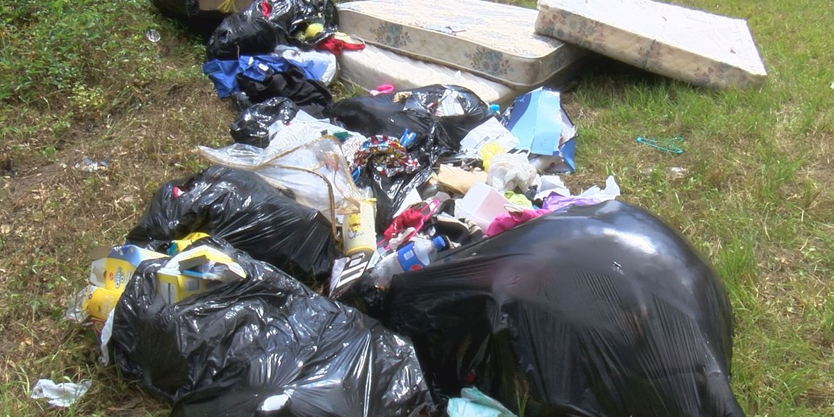 Albany investigates illegal dumping to enforce fines