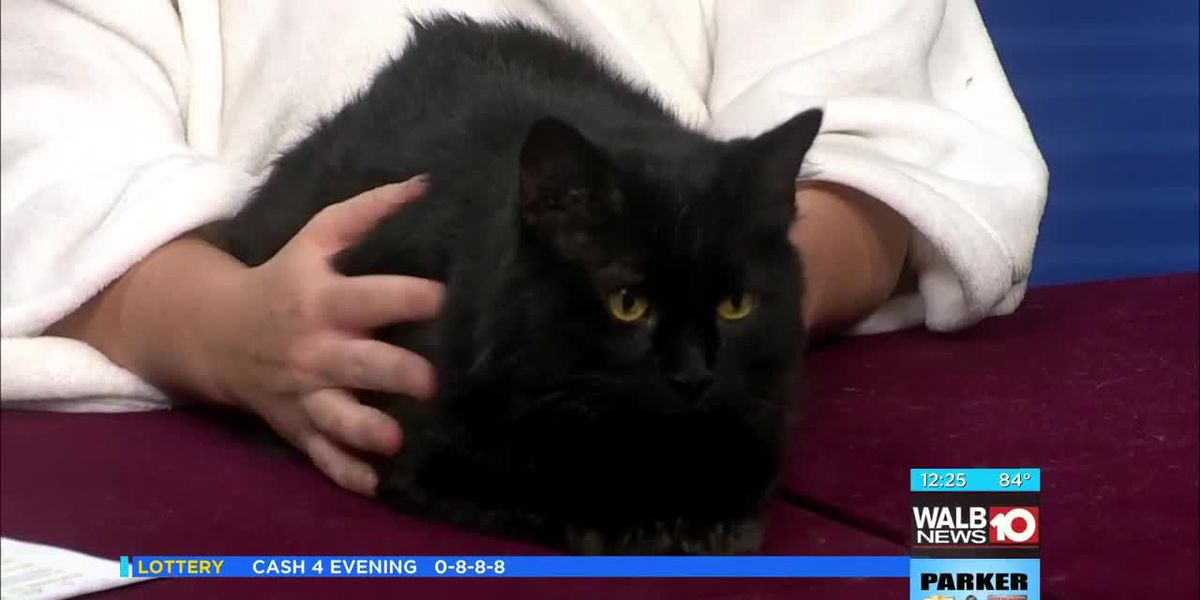 Thursday - Meet Eclipse, this week's Pet of the Week