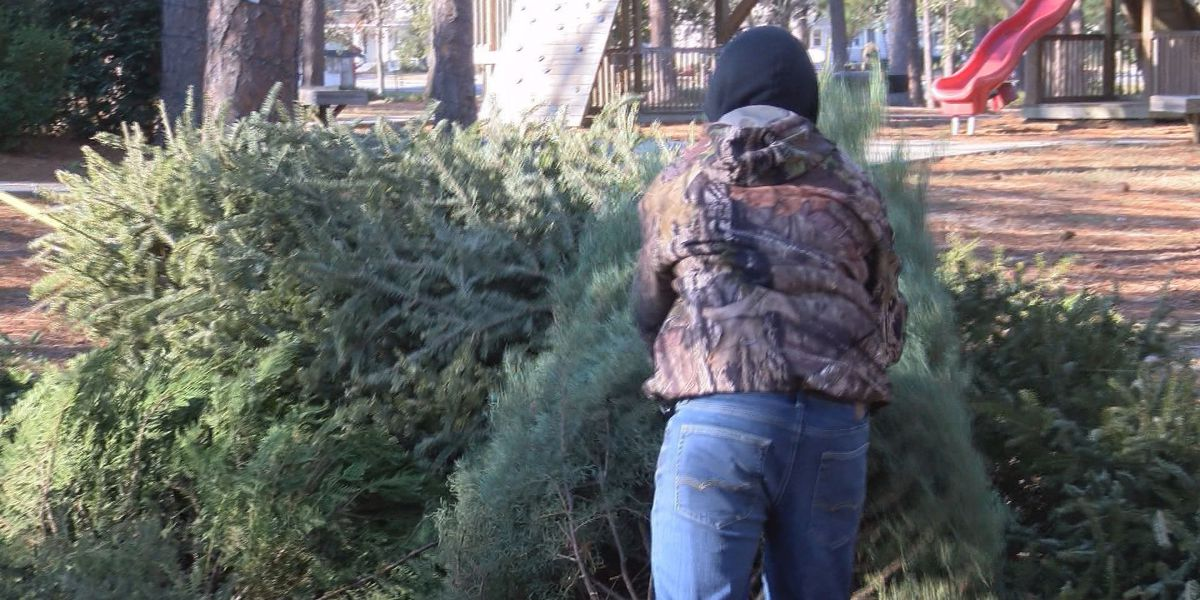 Keep Tift Beautiful offers Christmas tree recycling