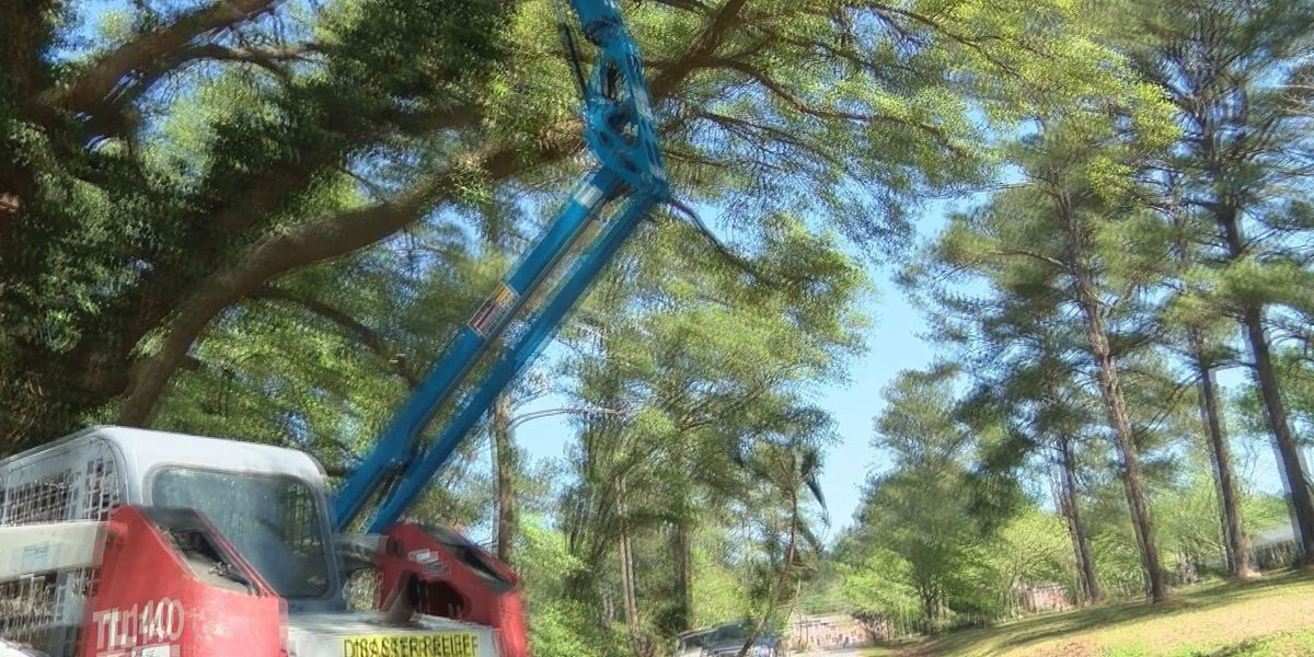 'Rebuilding Hope' comes to remove hanging trees