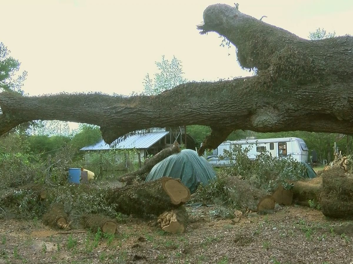 Cleanup continues after tree smash through Sylvester family's property