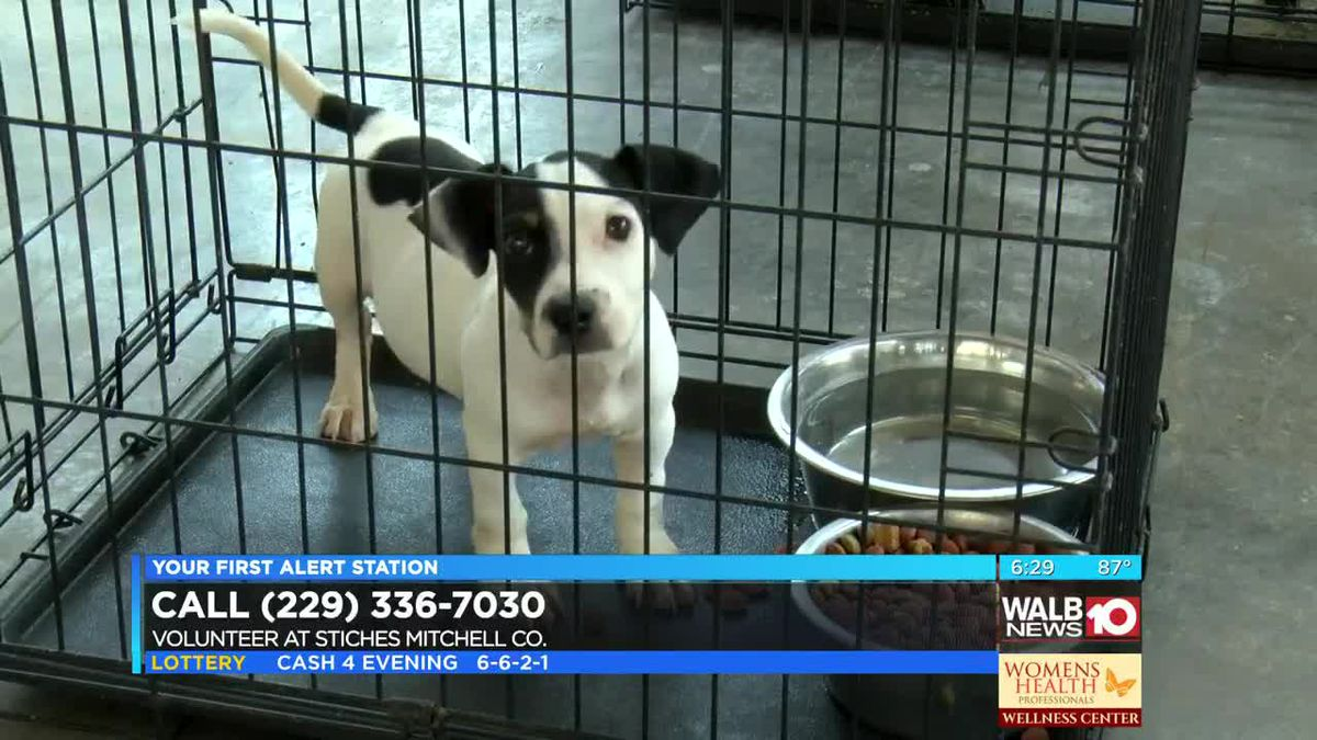 Mitchell Co. shelter saves nearly 30 strays, post-Michael