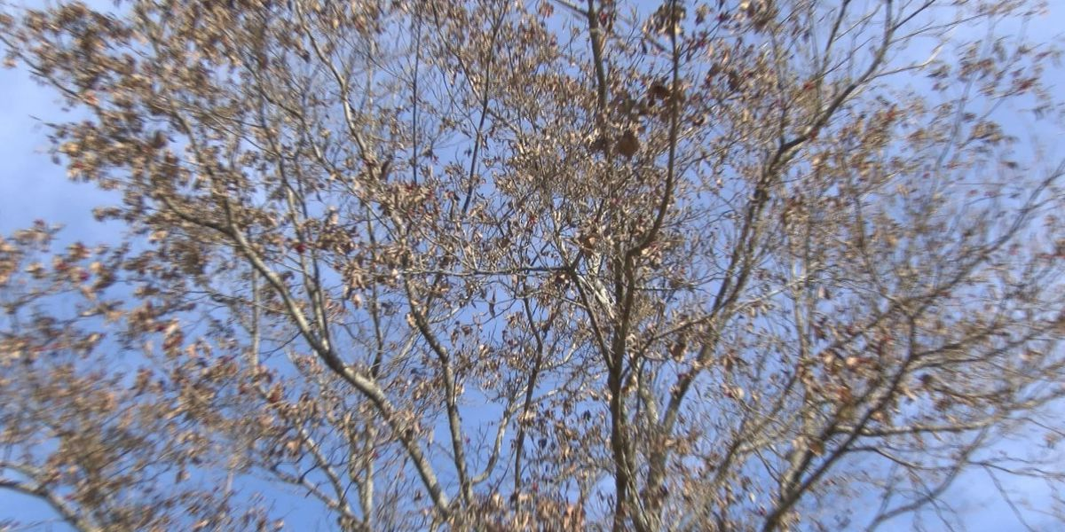 South GA drought could impact area plant life