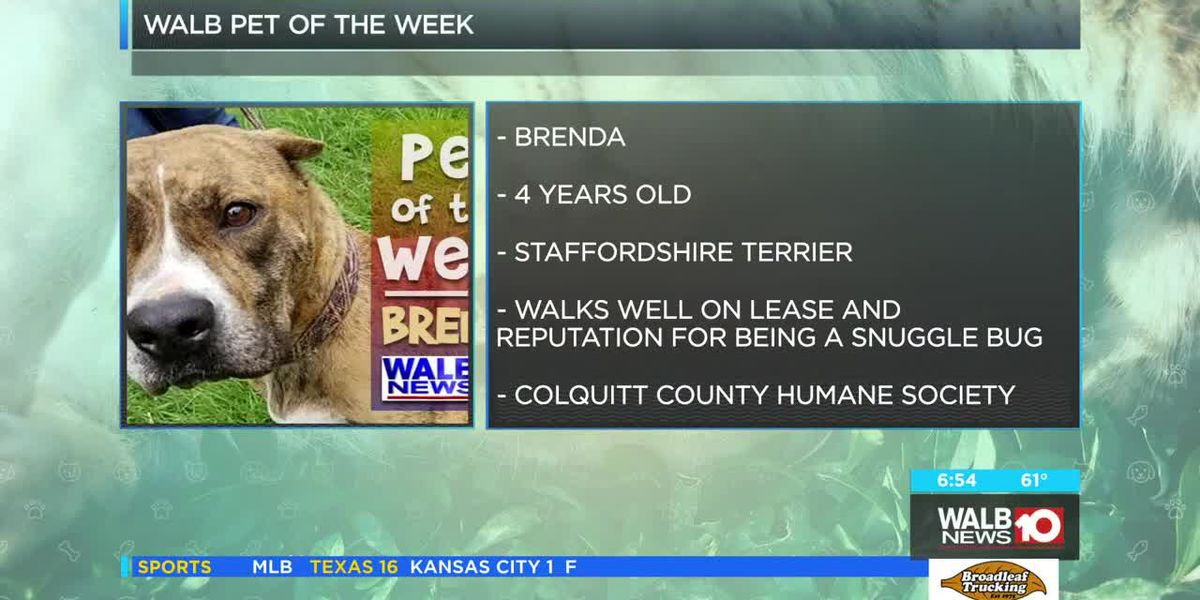 Pet of the Week May 13-17