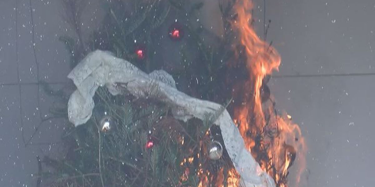 Christmas tree business going strong in Lowndes County