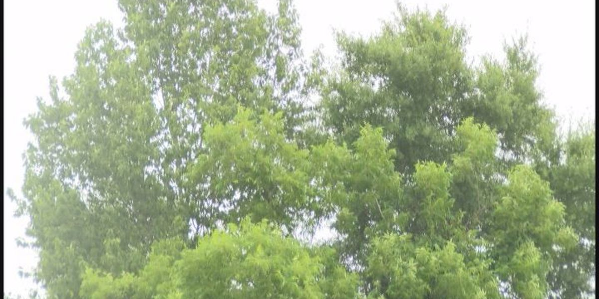 Albany city leaders work to preserve more trees