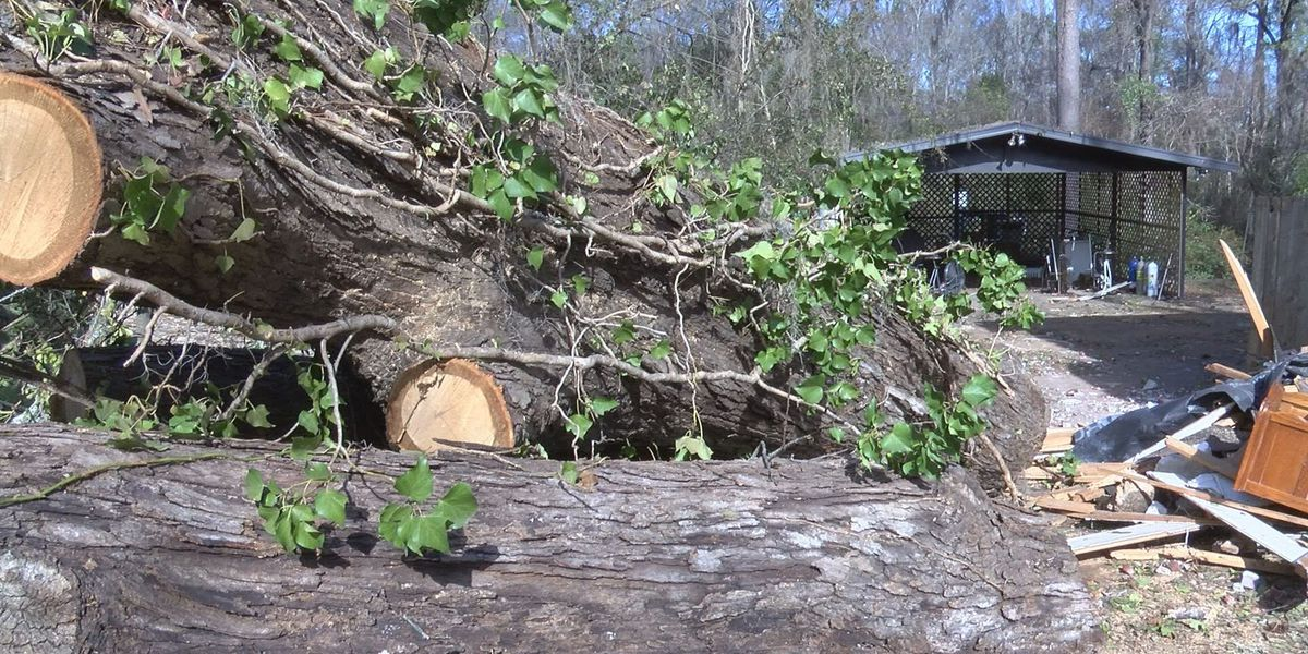 Volunteers needed for Saturday East Albany clean up