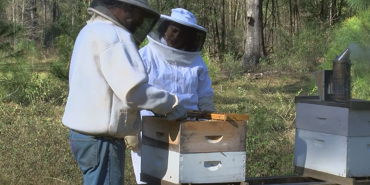 Honey bees essential to everyday living