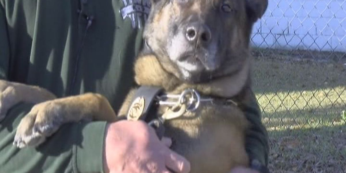 VPD wants four-footed officers