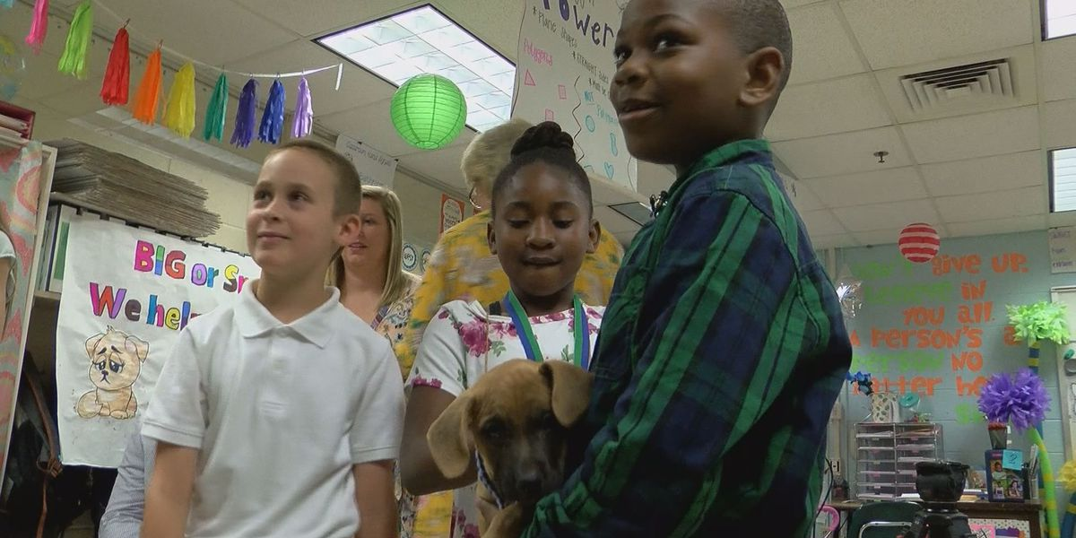 Students raise money to help dogs in need