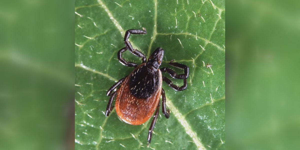 Health experts warn of bad tick season