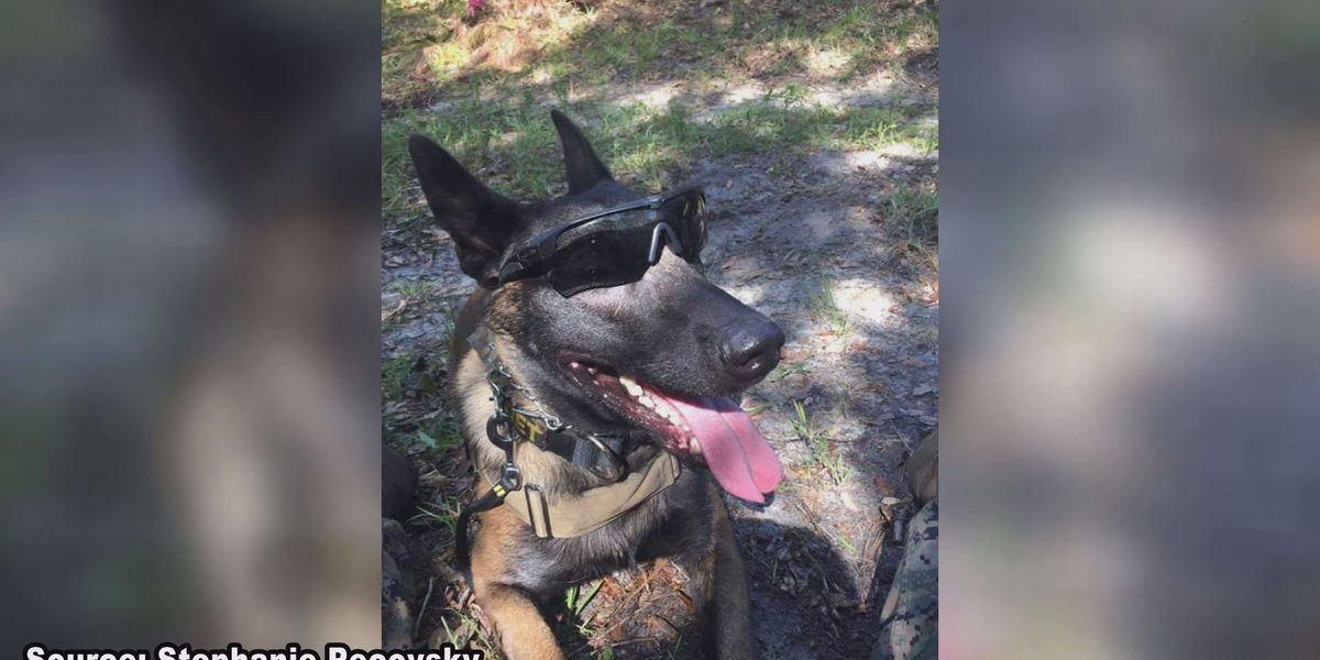Military working dog dies from heat stroke at MCLB Albany