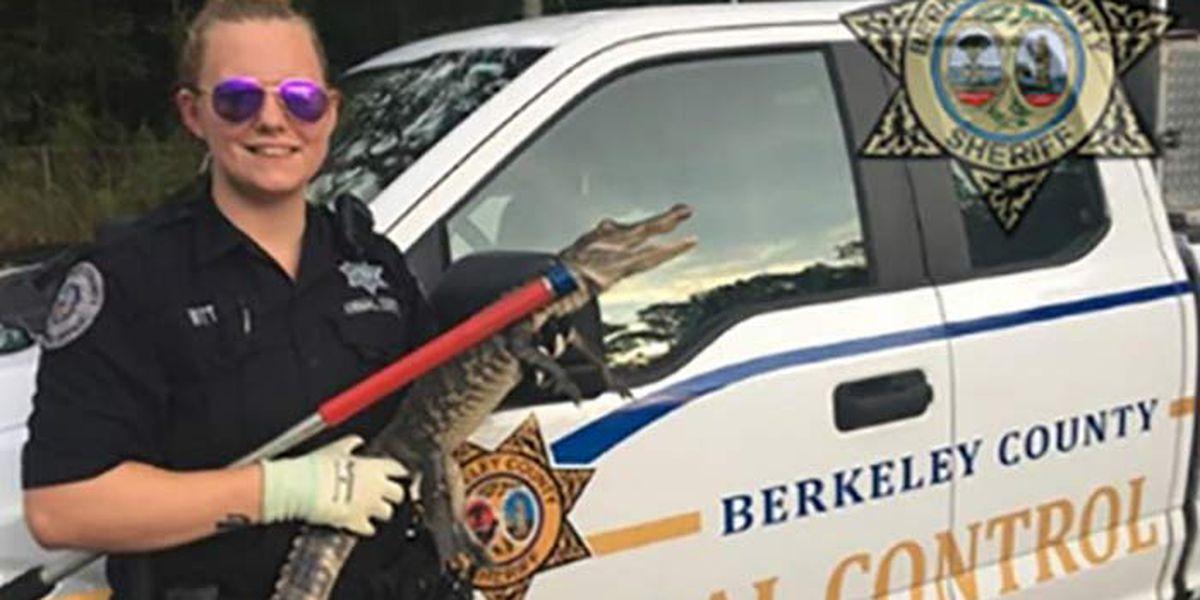 SC deputies capture young gator...and name it Dorian
