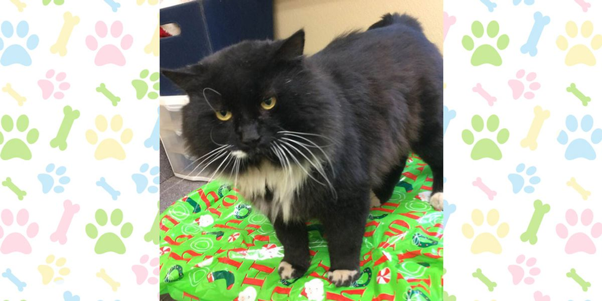 Pet of the Week, Dec. 3-7