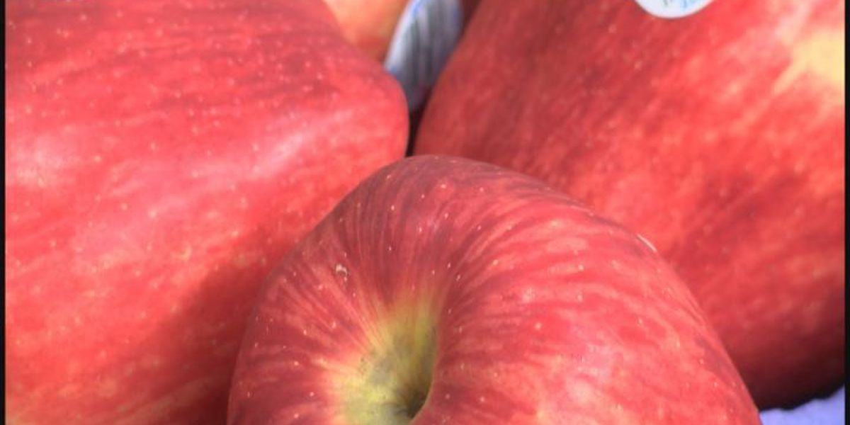 Nearly 10,000 pounds of apples donated to Second Harvest