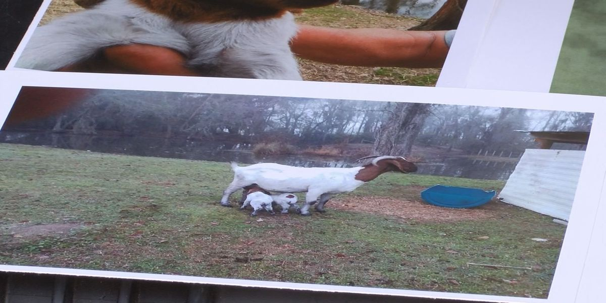 Eight goats killed on Cook Co. property