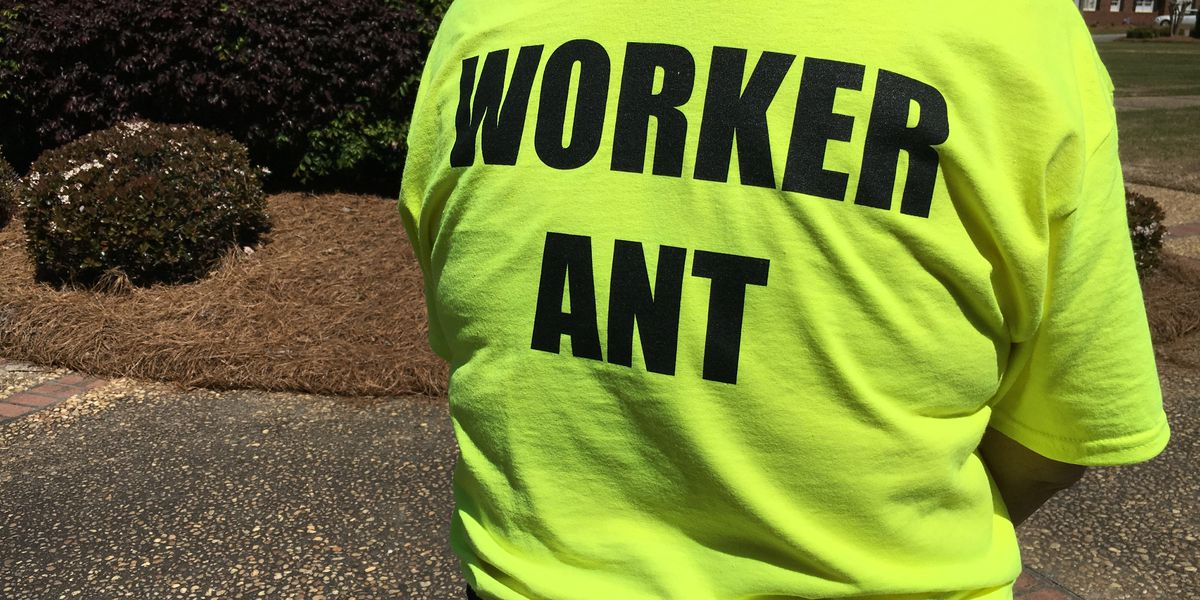Fire Ant Festival good for Ashburn economy