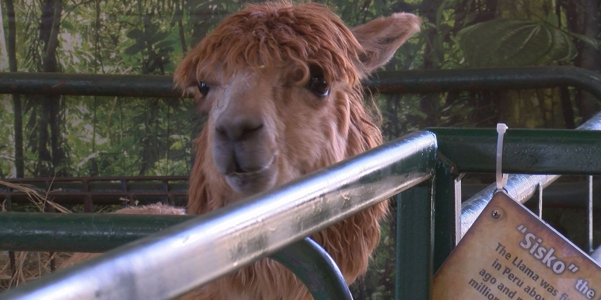 Eudora Farms Petting Zoo pampers their animals