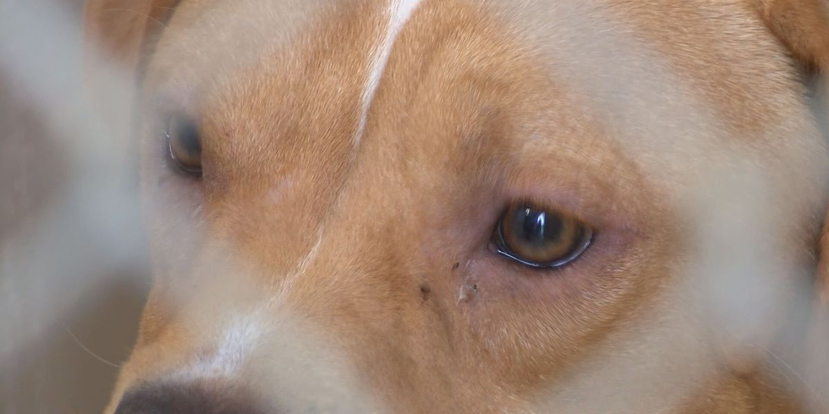 Lowndes Co. animal shelter overcrowded