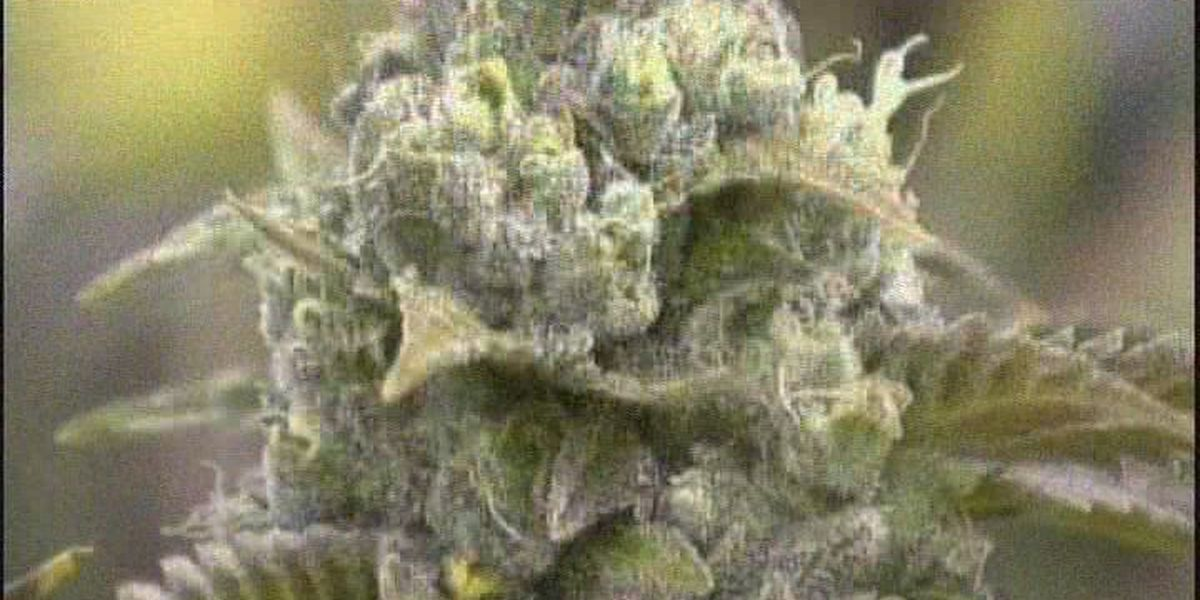 Cannabis committee has high hopes