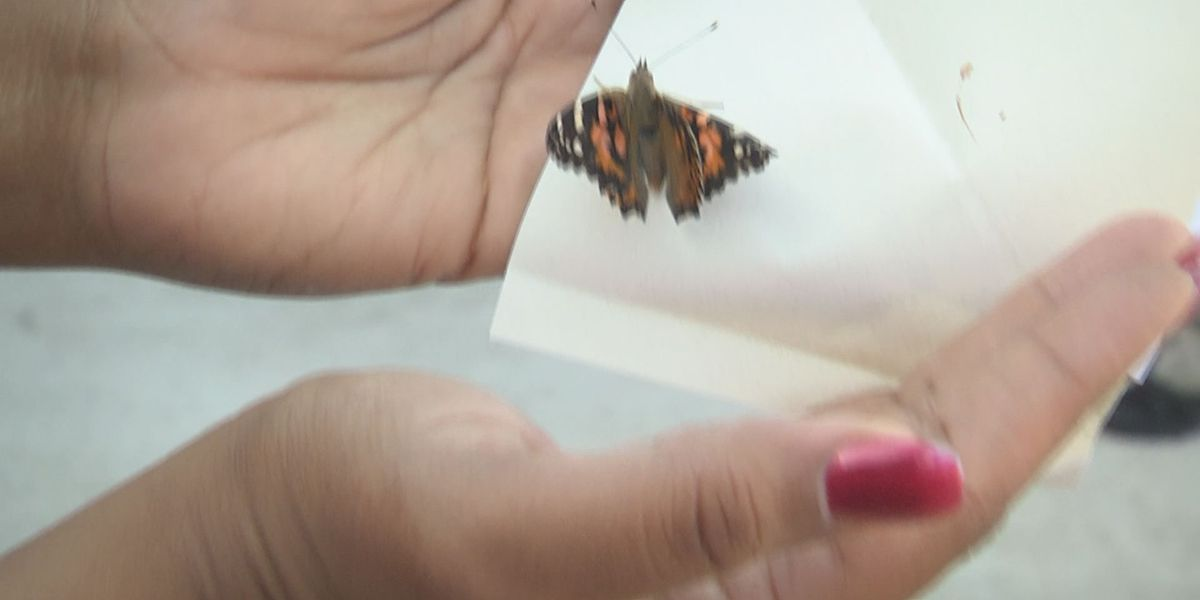 MADD releases butterflies to memorialize victims