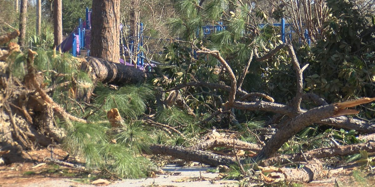 Paid Contractors must haul away debris in Albany