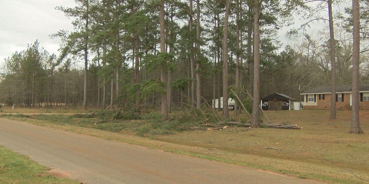 Tree smashes Sasser carport