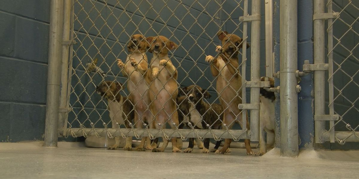Mother, 7 puppies abandoned at Lee County Animal Shelter