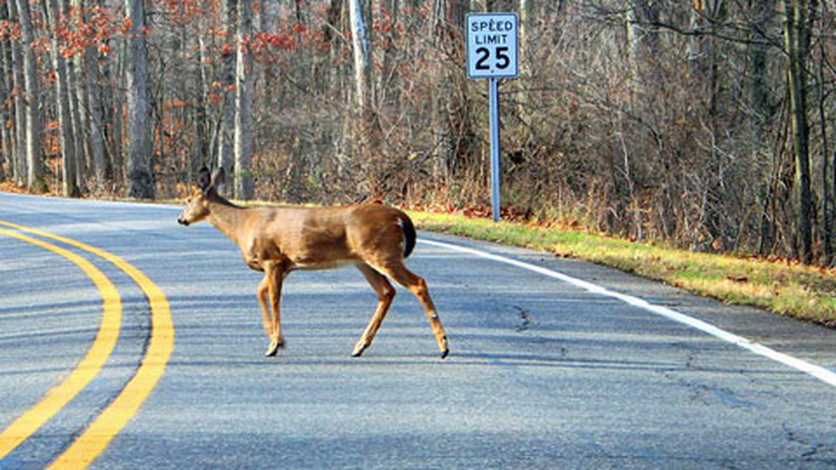 DNR: Drivers should be watching for deer