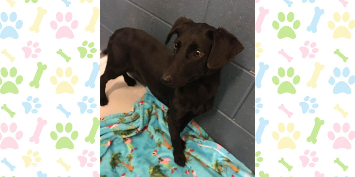 Pet of the Week, Feb. 11-15