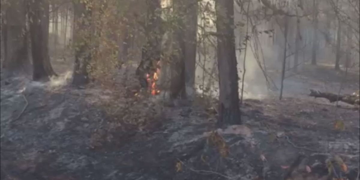 Drought, fires put foresters in a strain