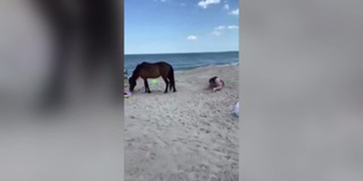 Woman smacks wild horse with shovel, gets kicked
