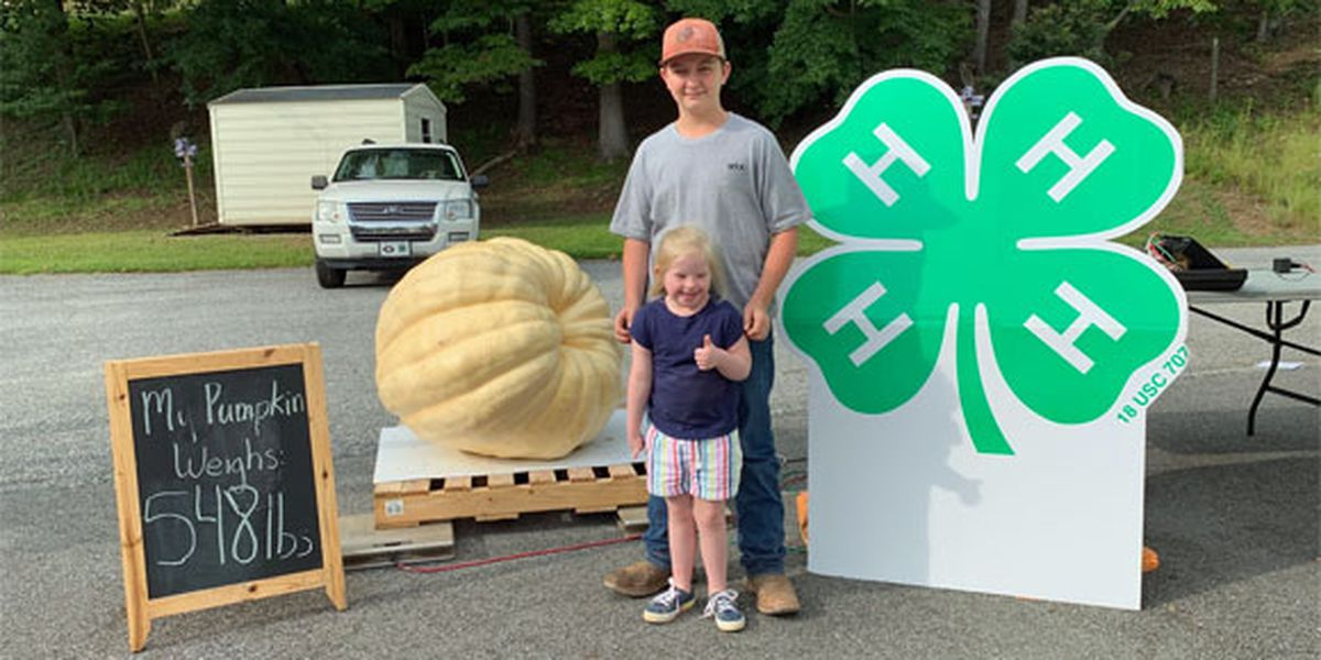 Prize-winning pumpkin weighs in at more than a quarter ton