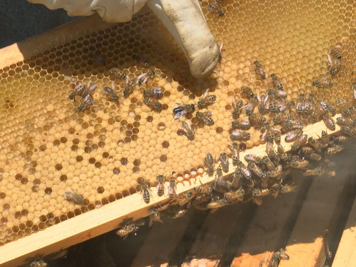 Bees impacted by Hurricane Michael and wet weather