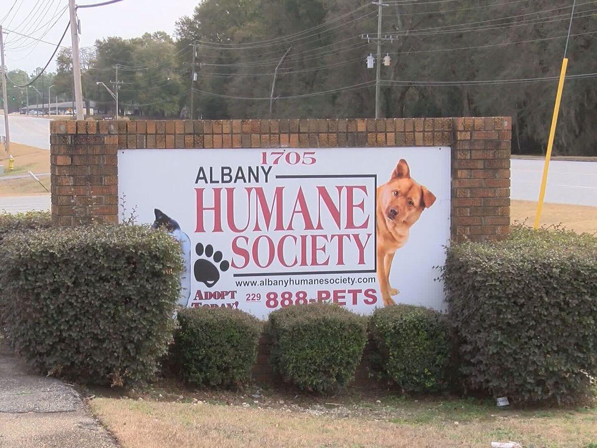 Parvovirus leads to Albany Humane Society quarantine
