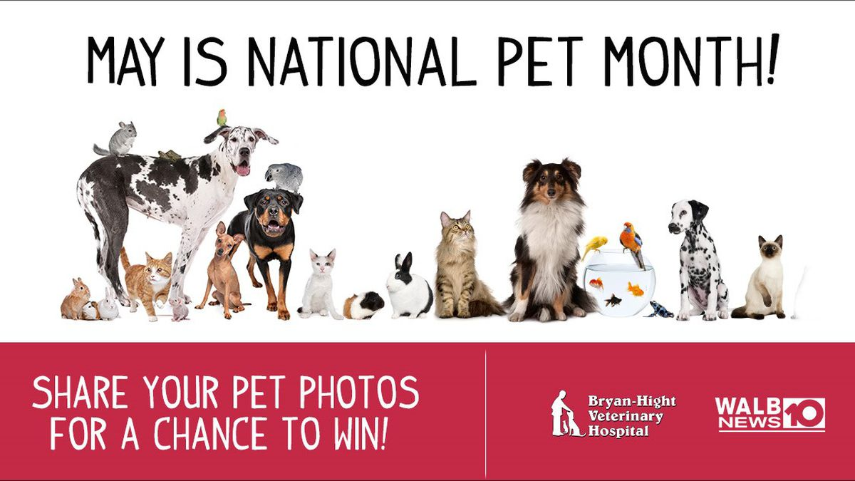Win a basket of treats for your fur baby